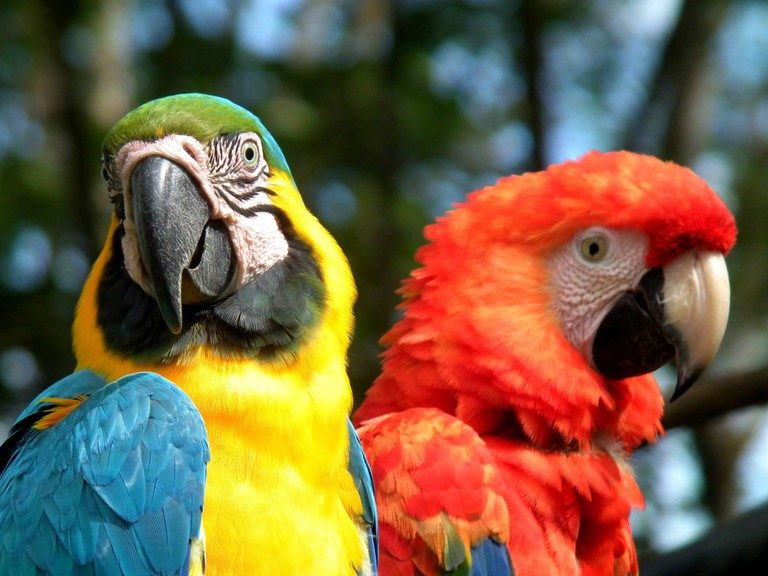 Examples of Colombia's remarkable biodiversity