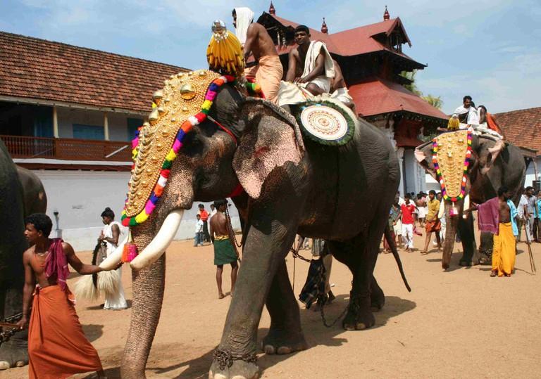 6.caparisoned_elephant_