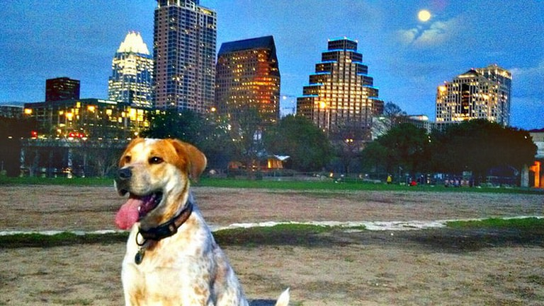 Full Moon Over Downtown and Dog | © Todd Dwyer/Flickr
