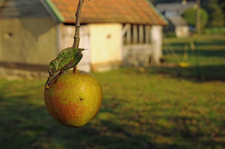 apple farm in normandy