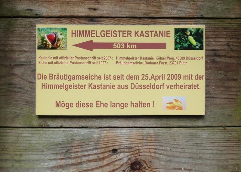 Bräutigamseiche_Sept_2014e_02