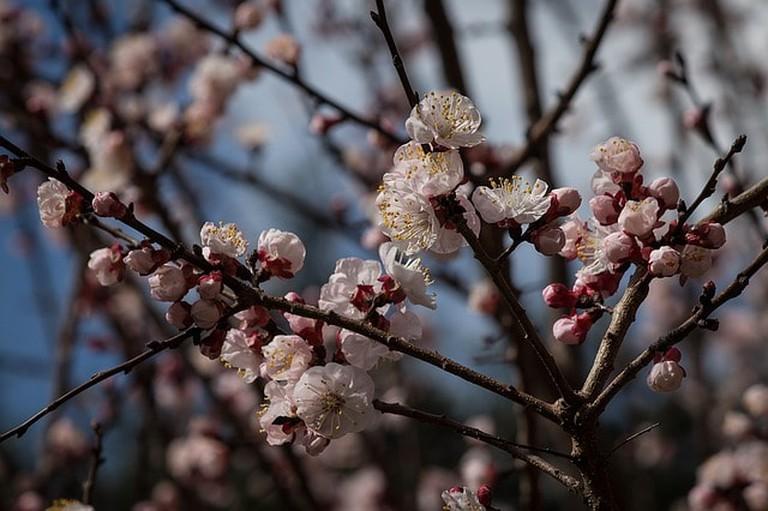 flowers-1510526_640
