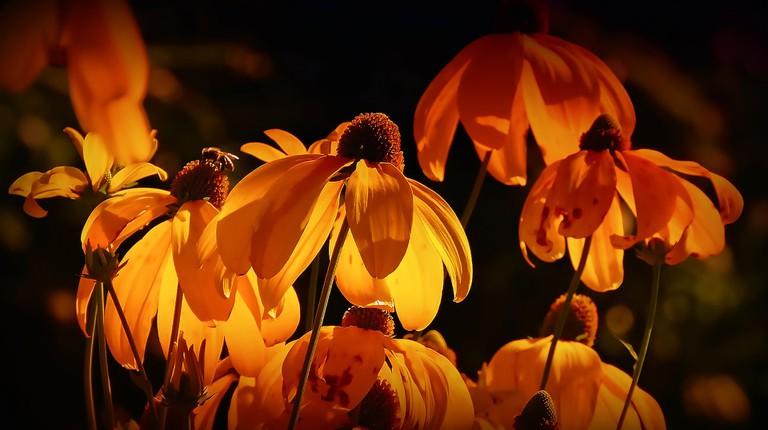 flowers-3215188_1920