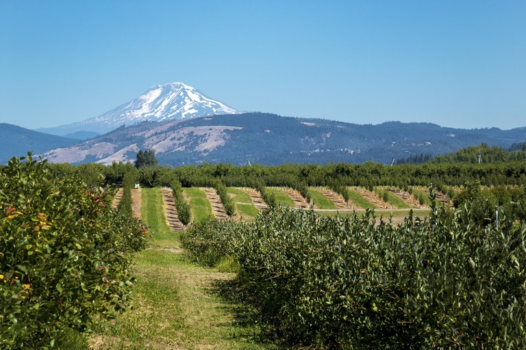 oregon-wineries