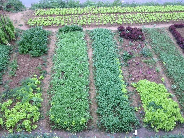 Organic city farming