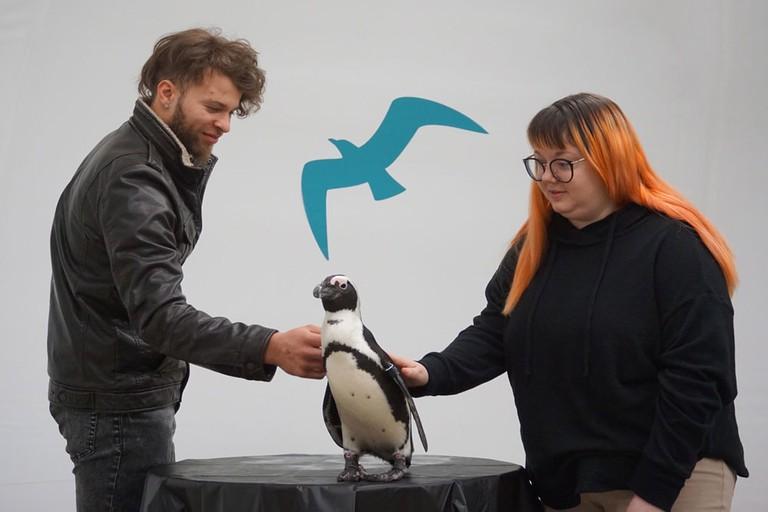 Penguin Encounter | Photo by David Kindervater