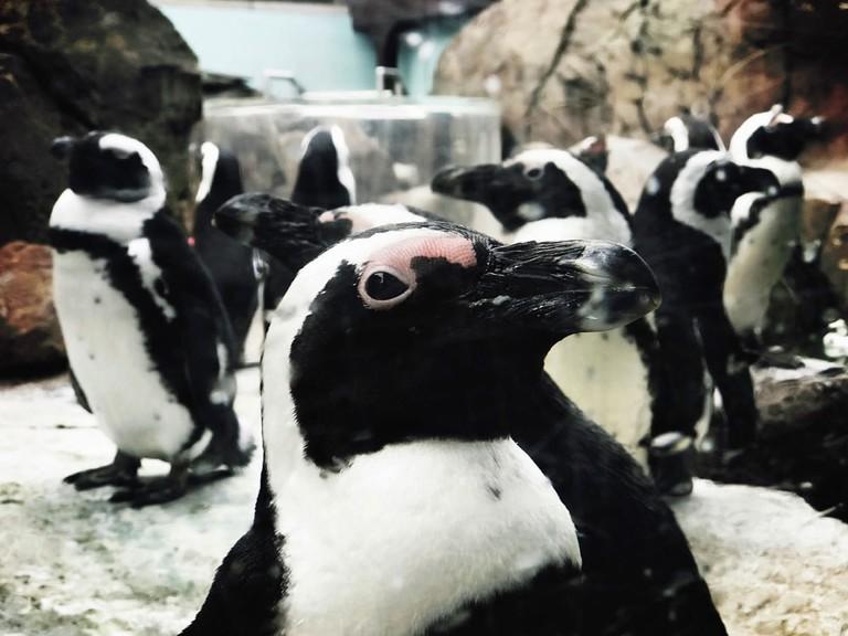 Penguin Point | Photo by David Kindervater