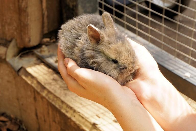 rabbit-1436329_960_720