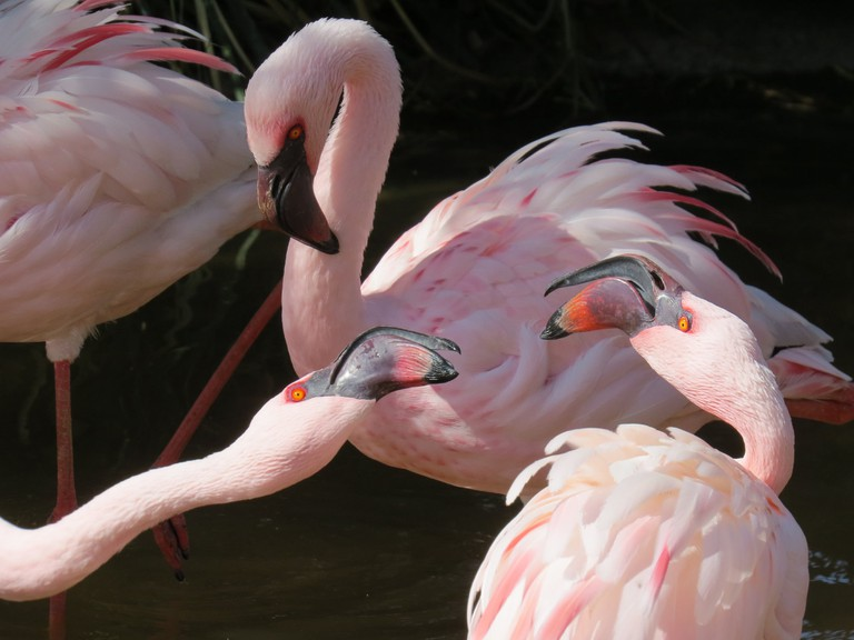 rsz_flamboyant_flamingos_cherylcrowley