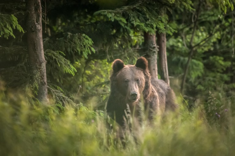 A brown bear. Best to leave well alone