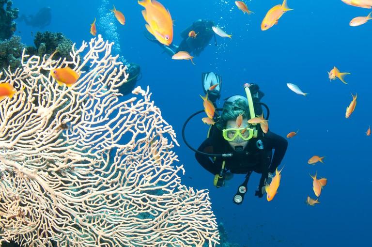 Scuba Diving on the Great Barrier Reef, Australia | ©JonMilnes/Shutterstock