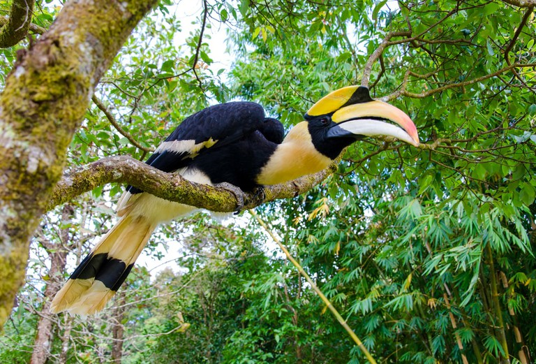 Great hornbill stand on the branch in forest | © WeStudio/Shutterstock