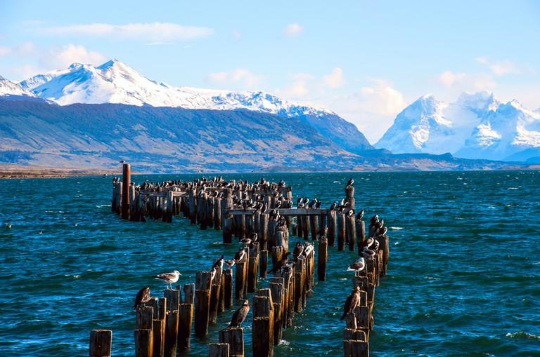 King Cormorant colony, Puerto Natales, Chile   © Ksenia Ragozina/Shutterstock