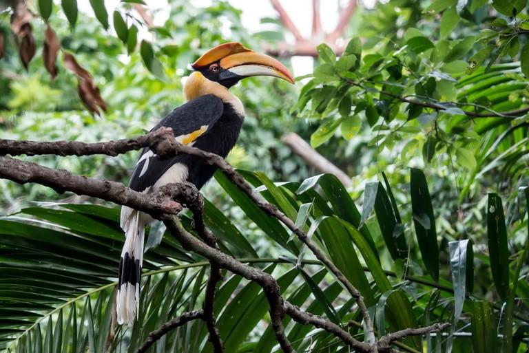 Yellow Billed Hornbill | © CrispyPork/Shutterstock