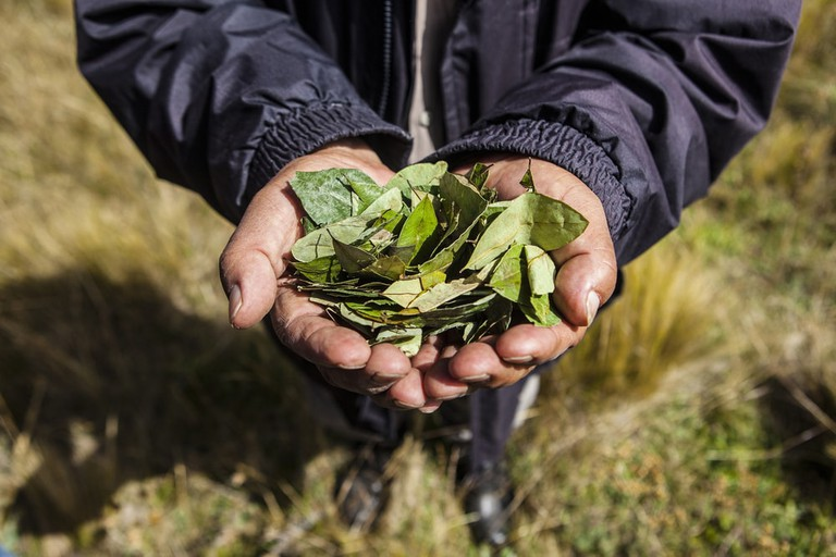 Coca leaves | © Mauricio Gil/Shutterstock