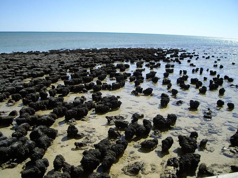 Stromatolites at Shark Bay | © Happy Little Nomad/Wikimedia Commons