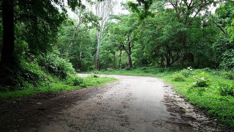1024px-Ghat_road_-_Anamalai_Tiger_Reserve,_Pollachi_-_panoramio_(3)