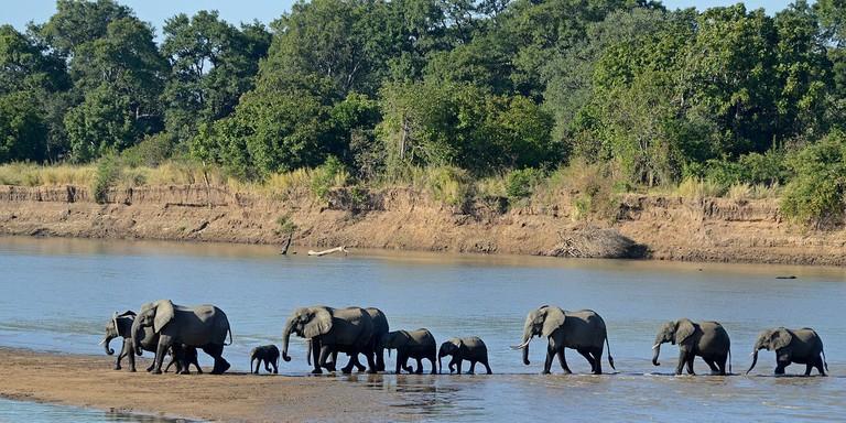 1200px-Loxodonta_africana_South_Luangwa_National_Park_(2)
