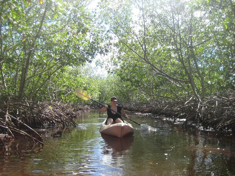 Kayaking in the mangroves of Utila, Honduras