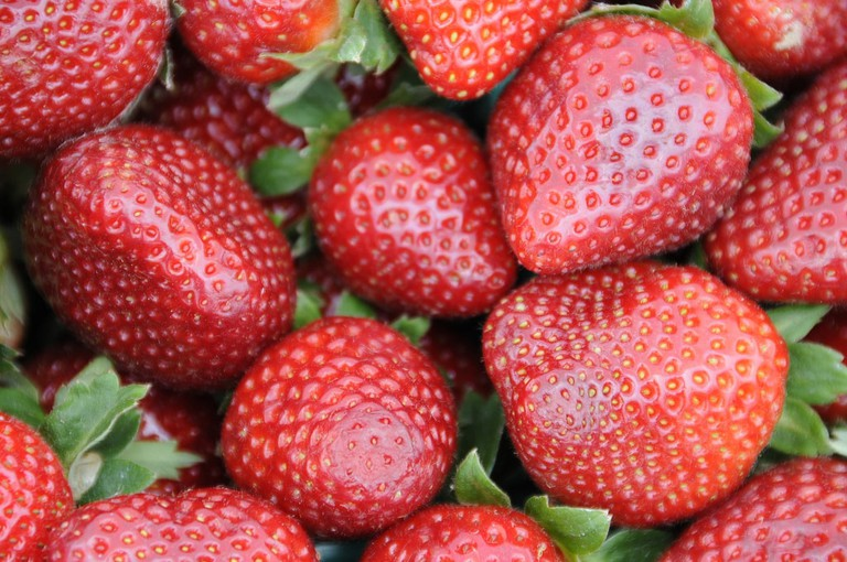 Strawberries, Ponchatoula, Strawberry Festival, Family Vacation