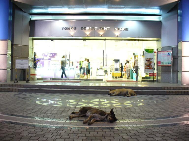 Stray dogs in Bangkok