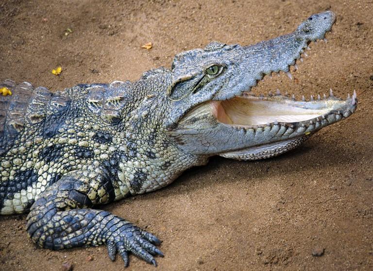 Crocodile | © Ravi Jandhyala/flickr