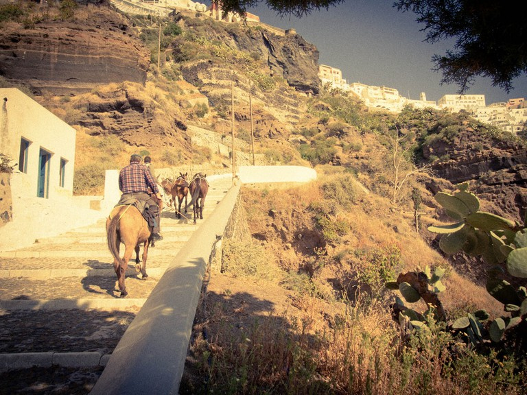 Donkeys heading up to Fira