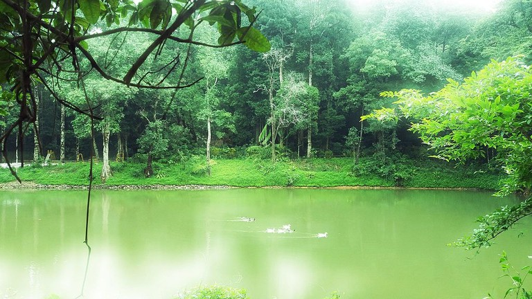 Agumbe_Rain_Forest_Karnataka_India