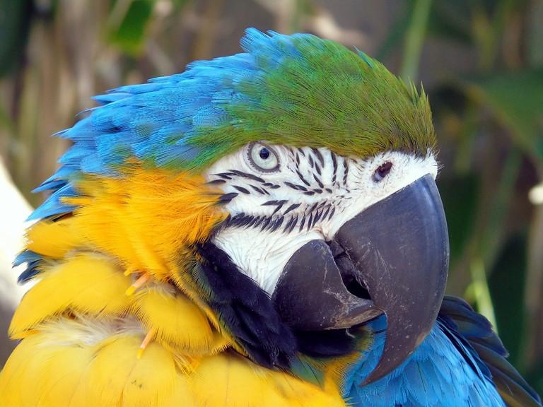 bird-3373608_1280