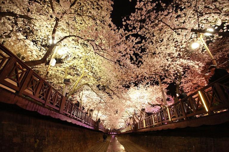 blossom-2333591_1280