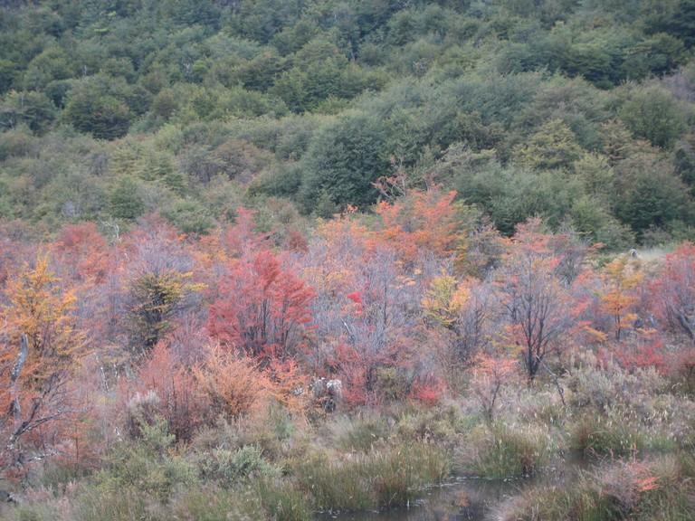 Autumn colours in Tierra del Fuego, Patagonia