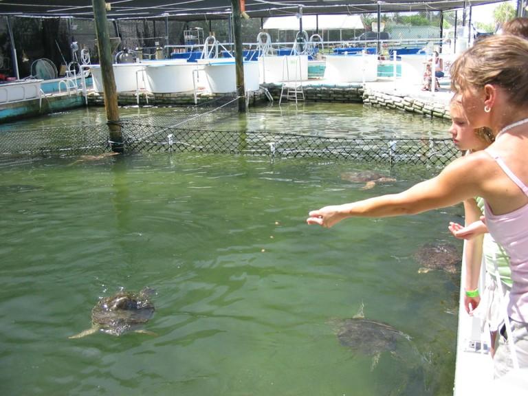 feed turtle hospital
