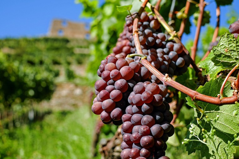 grapes-2672886_1280