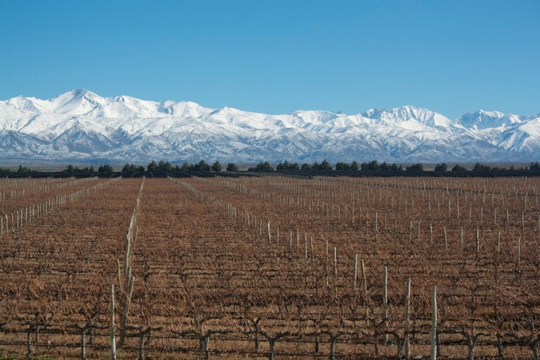A vineyard with the Andes in the background, Mendoza