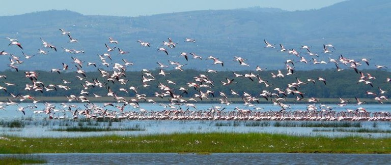 lake flamingoes