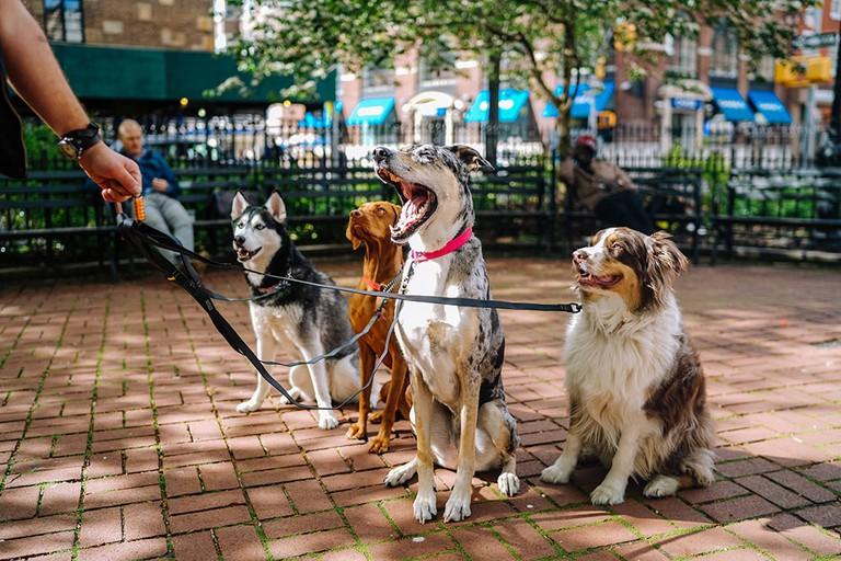 matt-nelson-259365-dogpark