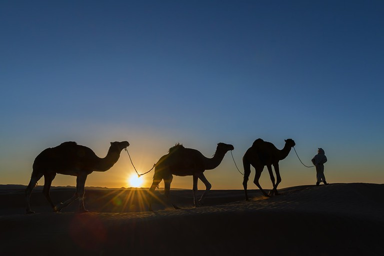 A nomad with dromedaries in the desert.
