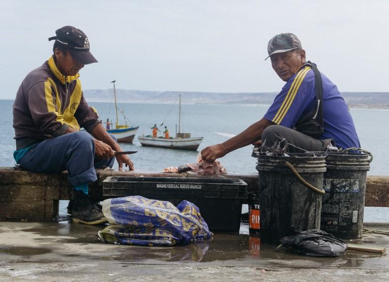 LOBITOS-PERU-SPINGOLA