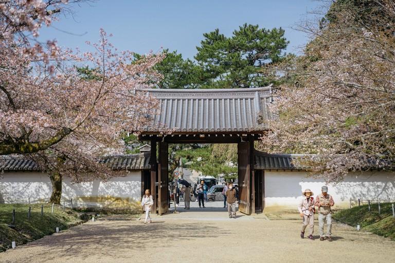 CHERRY BLOSSOM-DAIGOJI TEMPLE-KYOTO-JAPAN