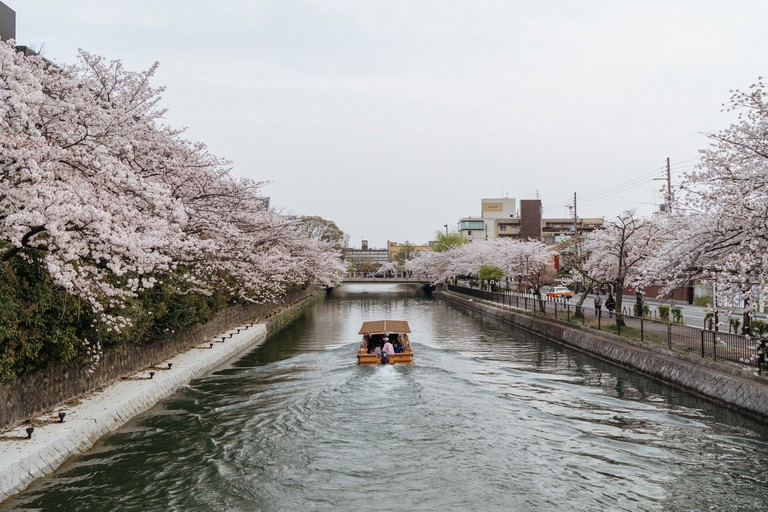 CHERRY BLOSSOM-OKAZAKI CANAL-KYOTO-JAPAN