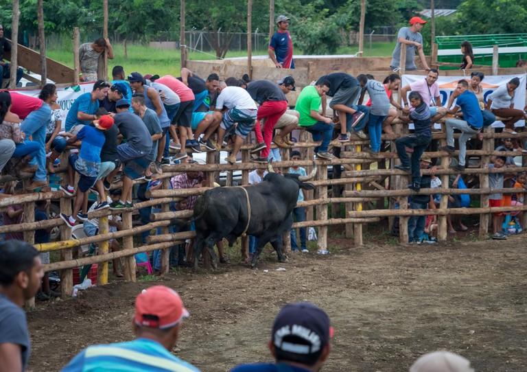 Traditional bull fight, Santa Cruz, Costa Rica | © Marvin Minder/Shutterstock