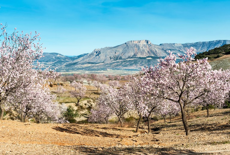 Almond Blossom, Andalusia, Spain   © Fotomicar/Shutterstock