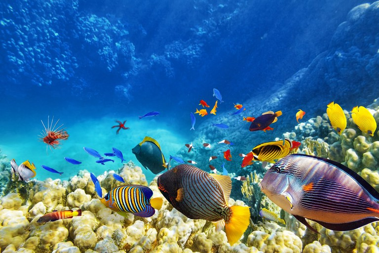 Underwater world with corals and tropical fish