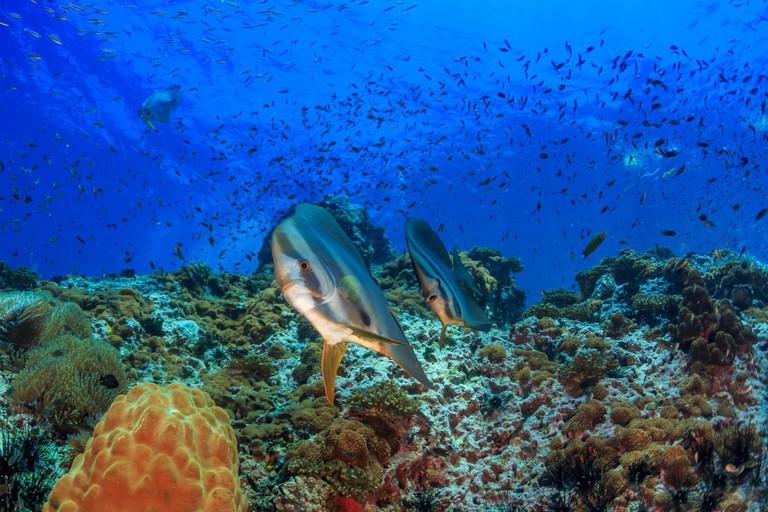 Coral reef, Sail rock, Thailand
