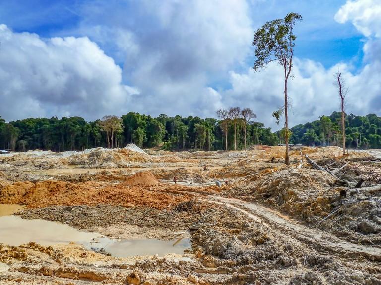 Rainforest destruction | © kakteen/Shutterstock