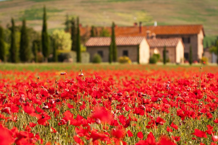 Tuscan scene   © Grischa Georgiew/Shutterstock