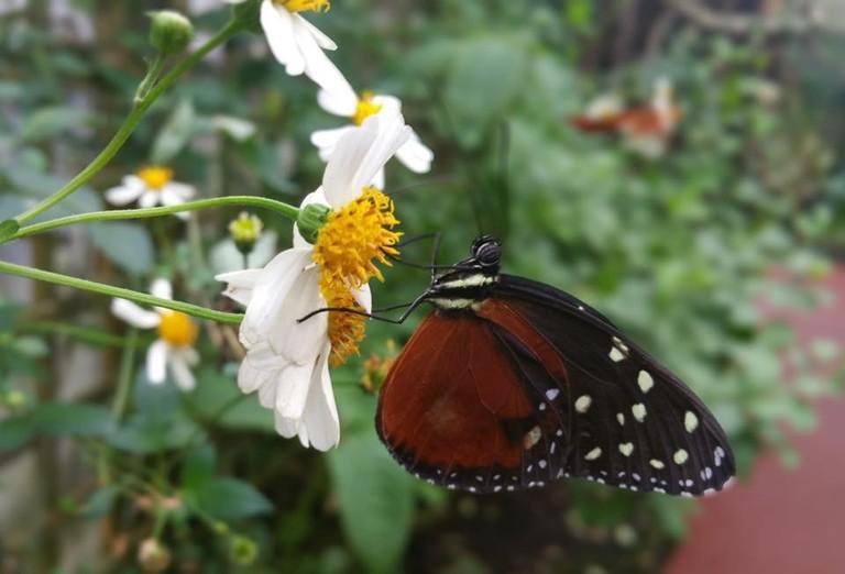 Stratford-upon-Avon Butterfly Farm | © Facebook