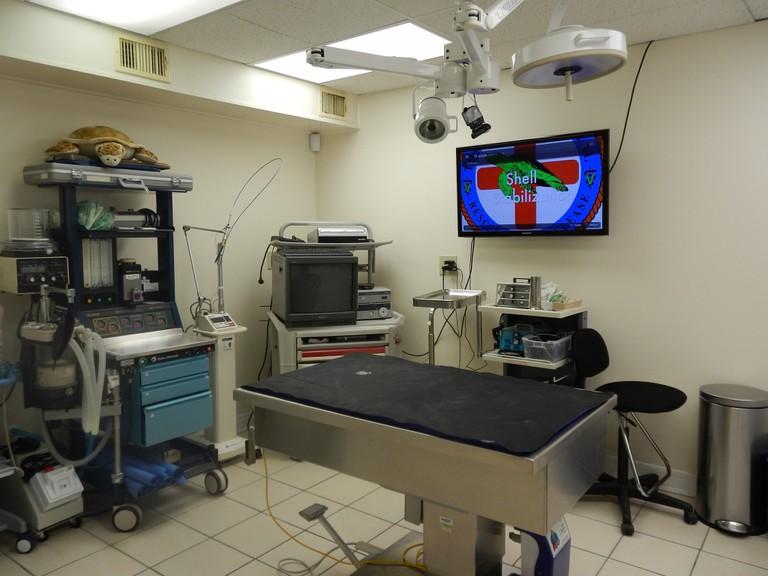 surgery turtle hospital