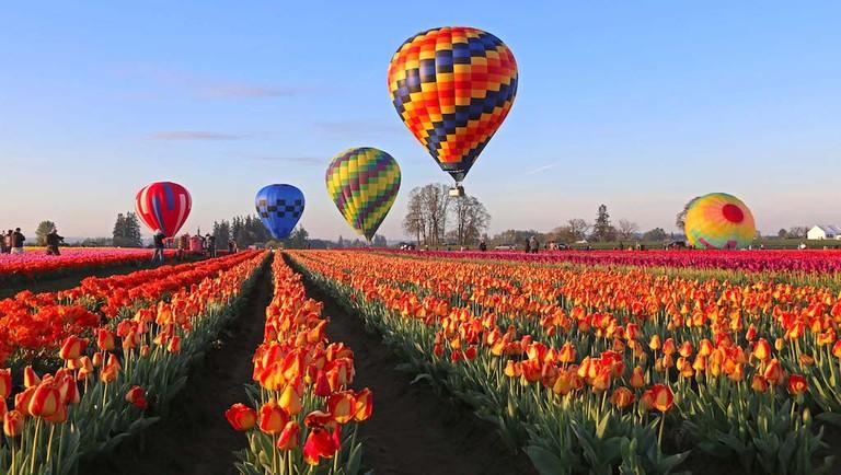 wooden-shoe-tulip-festival-2
