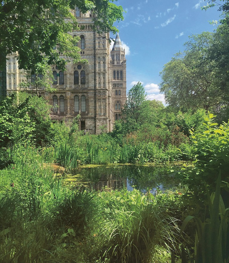 The Wildlife Garden at Natural History Museum, London